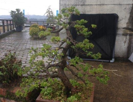 Fotky z japonska 31